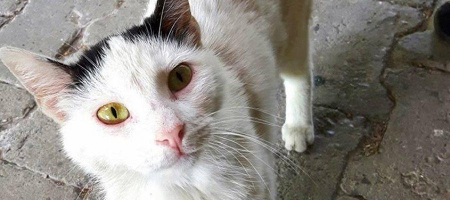 kissa-steriloinnit